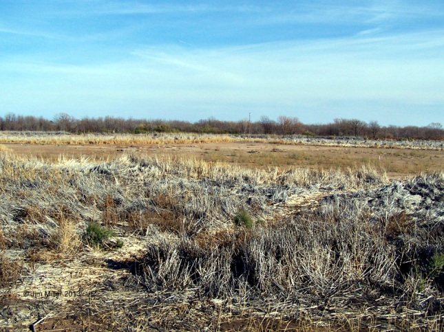 Dry cattails line the dry and barren bed of Lake Wichita.